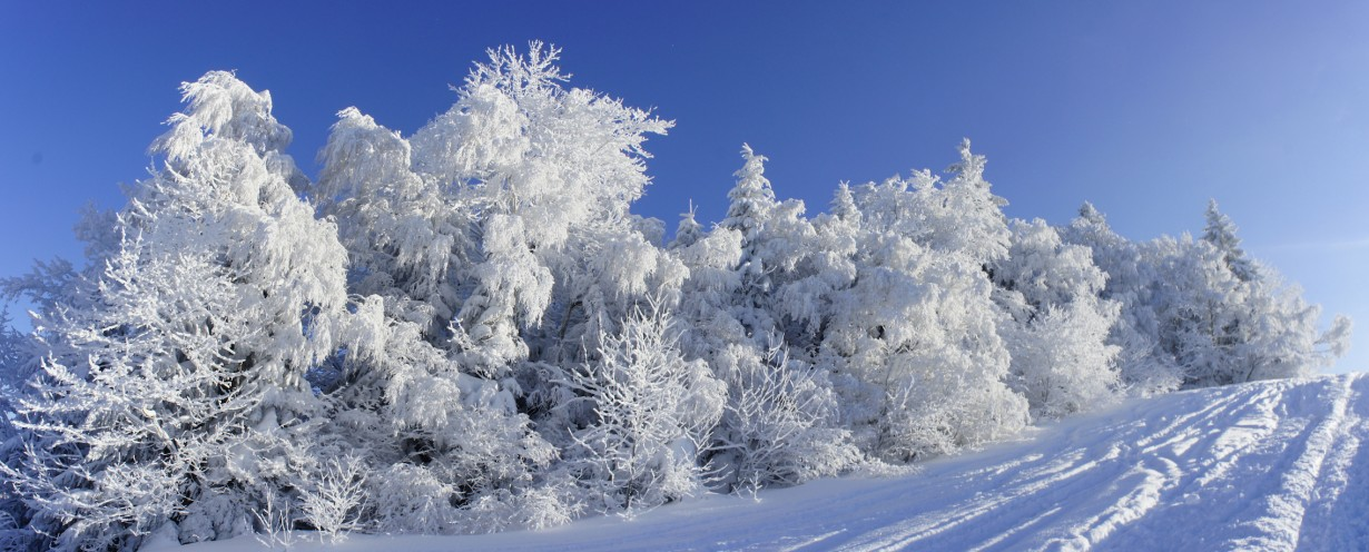 Pfänder Snow